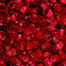 Свежие лепестки роз красные