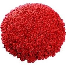 Букет из 501 розы
