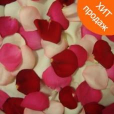 Свежие разноцветные лепестки роз