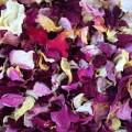 Сухие лепестки чайной розы