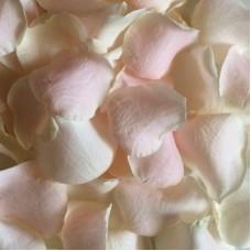 Лепестки роз кремовые