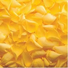Лепестки роз желтые