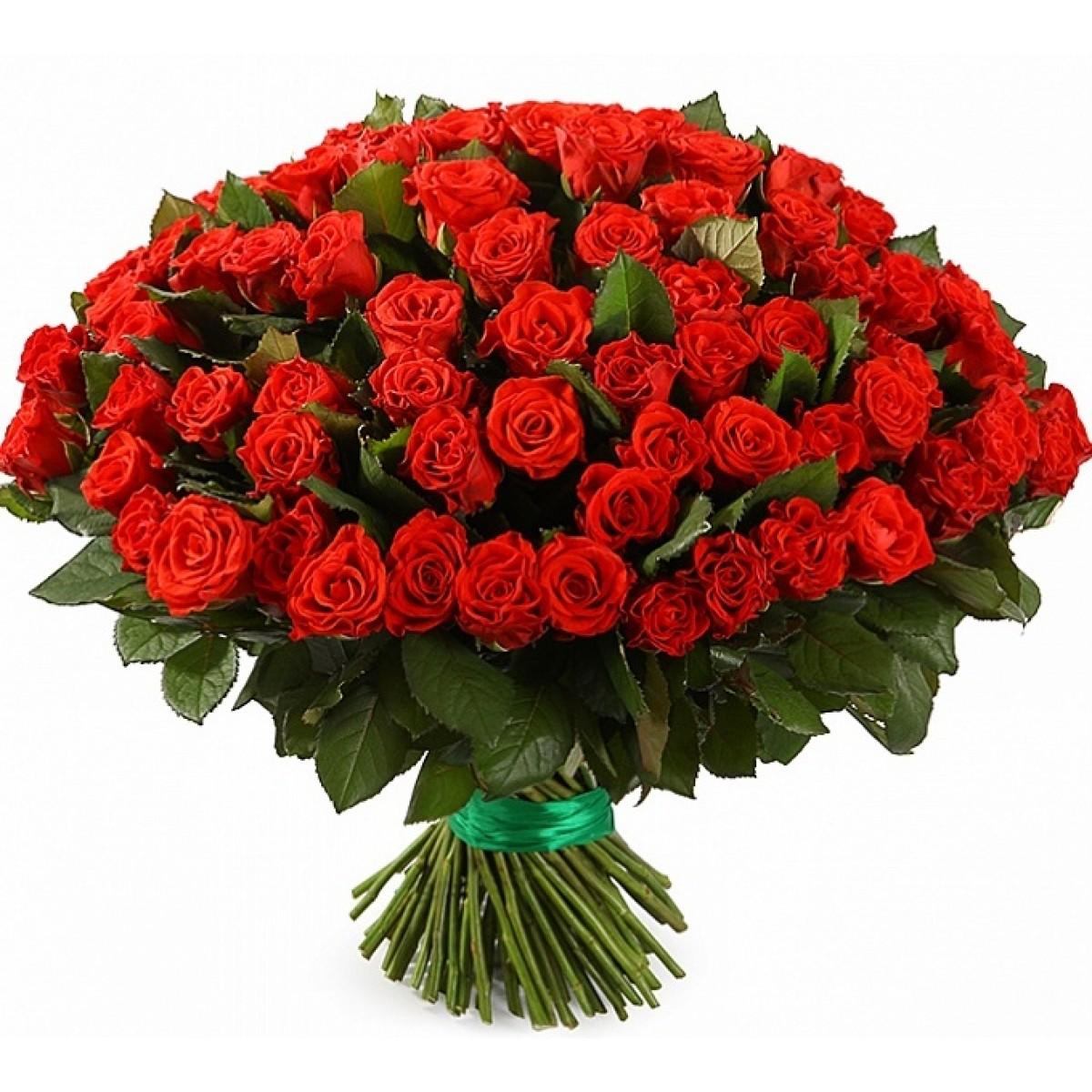 101 красная роза купить